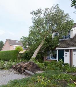 tree on house 1 a-web